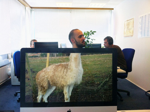 IMAGE : Desk Safari Lama