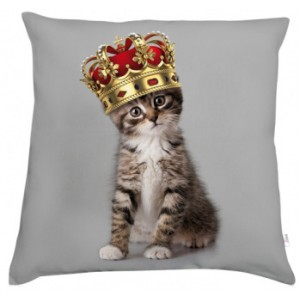 IMAGE : coussin chat concours