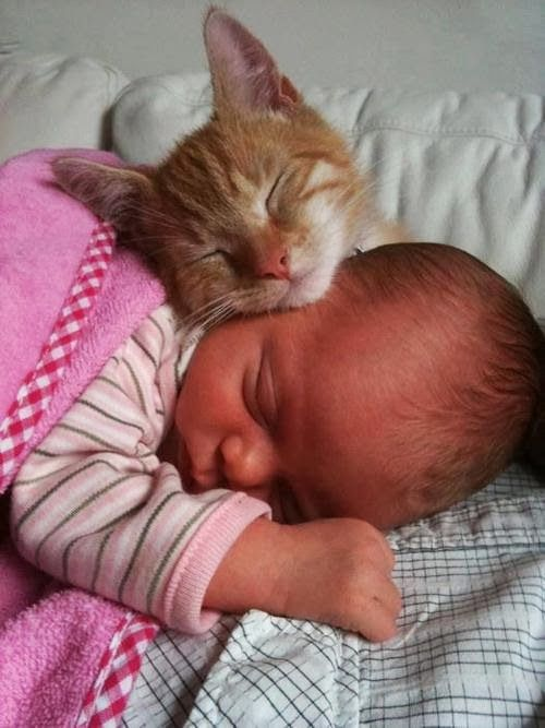 IMAGE : Moment de tendresse