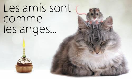 IMAGE : Anniversaire animaux
