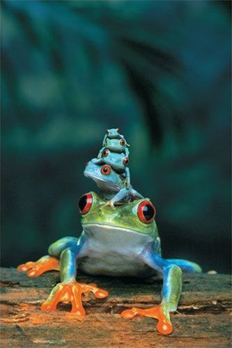 IMAGE : Famille grenouille